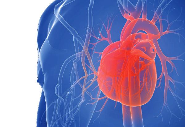 Gefäßverschlüsse durch Kalkablagerungen in den Herzkranzgefäßen bedrohen die Funktion des Herzens. Bei einem Infarkt drohen bleibende Schäden undsogar der Tod, wenn nicht sofort gehandelt wird. Bestimmte Symptome sind ernstzunehmende Vorboten. Foto: Fotolia.com/S. Kaulitzki