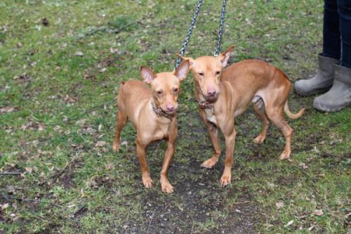 Das Hundeduo Roland und Roswitha sehnt sich nach einem liebevollen Zuhause. Foto: Uwe Wolf