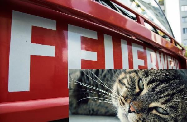 Eine Katze löste in Zwickau Alarm aus.