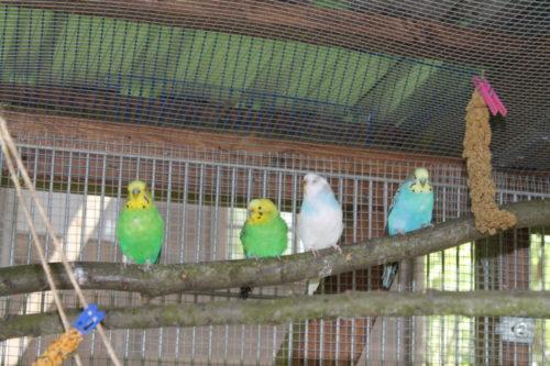 Das Tierheim Langenberg für Vögel wie diese dringend ein neues, liebevolles Zuhause. Foto: Uwe Wolf