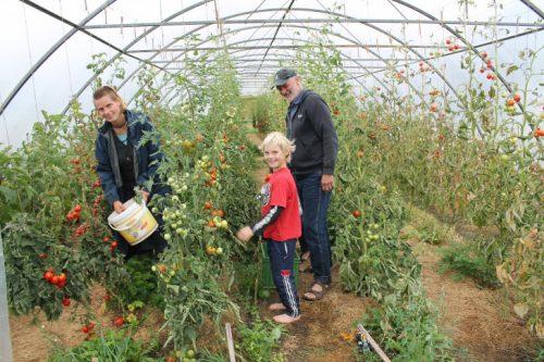mit Mitgliedern der Landwirtschaft bei der Tomatenernte. Foto: Uwe Wolf