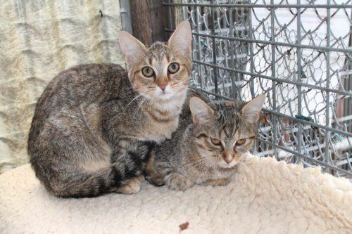 Das Tierheim sucht dringend ein neues Zuhause für die Katzen Hanni und Nanni. Foto: Uwe Wolf