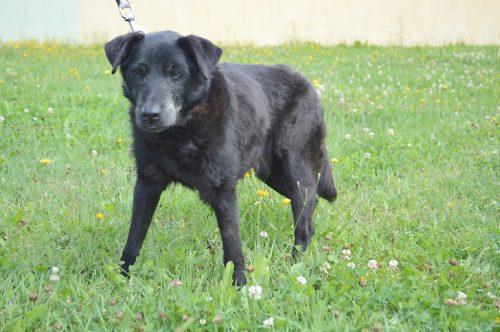 Wer hat ein Herz für diesen Hund und bietet ihm ein liebevolles Zuhause? Foto: Tierheim