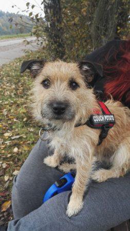 Wer kann helfen und erkennt diese Hunde wieder? Fotos: Polizei