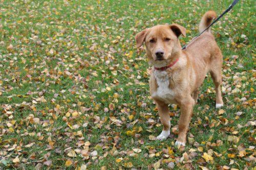 Das Tierheim sucht dringend ein neues Zuhause für den Fundhund Kurt. Foto: Uwe Wolf