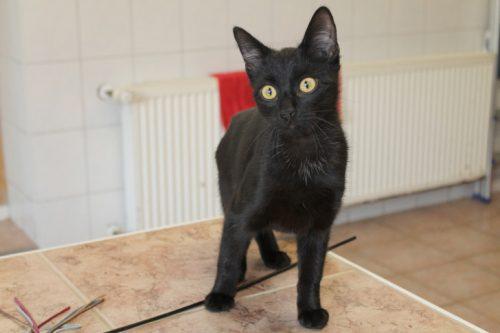Für Kätzchen Frechdachs wird ein liebevolles Zuhause gesucht. Foto: Uwe Wolf